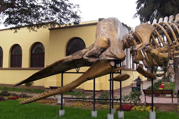 Museo Historia Natural de Lima